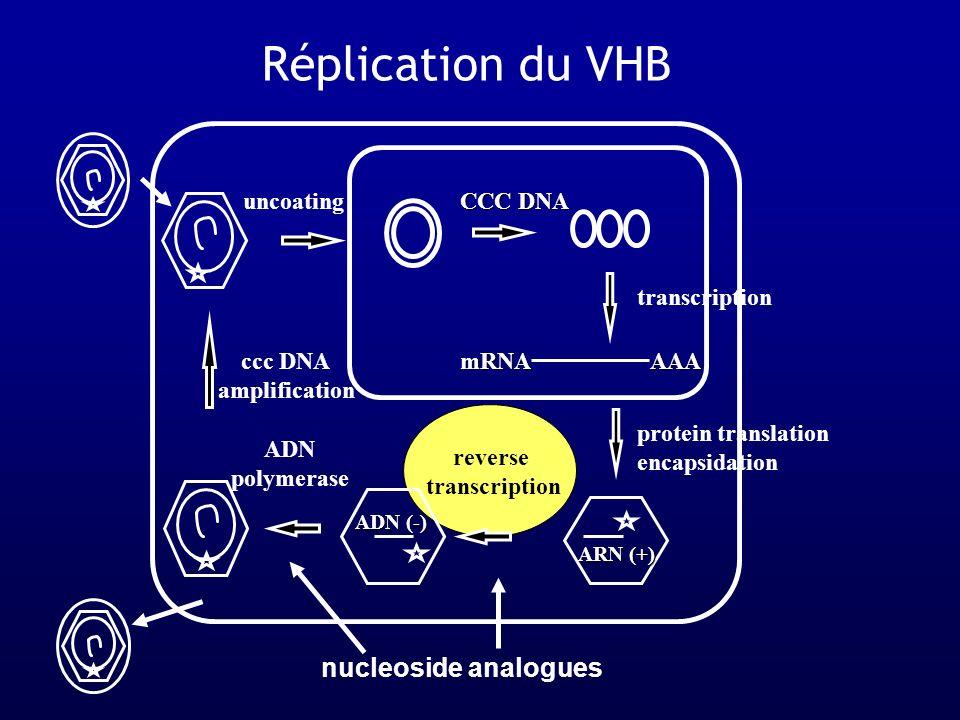 AAA uncoating mRNA reverse transcription ADN polymerase CCC DNA ccc DNA amplification ADN (-) ARN (+) transcription cytokines antisense ribozyme nucleoside analogues antisense cytokines antisense protein translation encapsidation vaccins Possibilités thérapeutiques reverse transcription