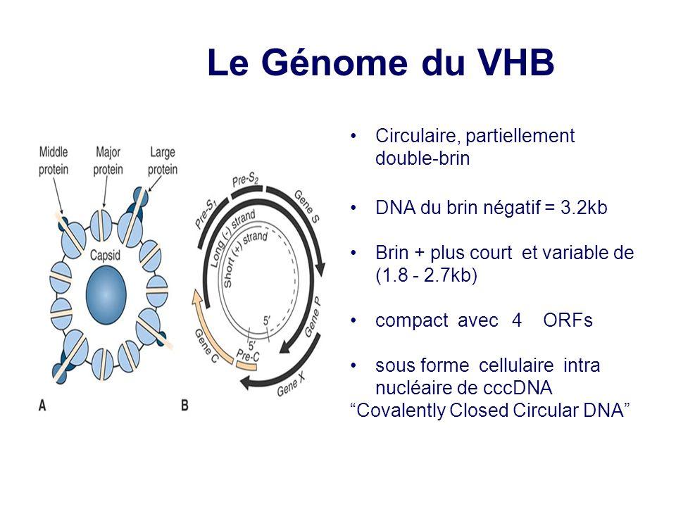Circulaire, partiellement double-brin DNA du brin négatif = 3.2kb Brin + plus court et variable de (1.8 - 2.7kb) compact avec 4 ORFs sous forme cellul