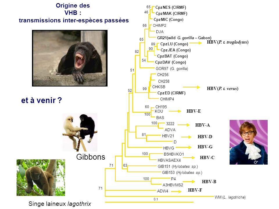 0.1 CpzNES (CIRMF) CpzMAK (CIRMF) 65 CpzMIC (Congo ) 46 CHIMP2 DJA GR21(wild G. gorilla – Gabon) 66 CpzLU (Congo) CpzJEA (Congo) 89 CpzBAT (Congo) 90