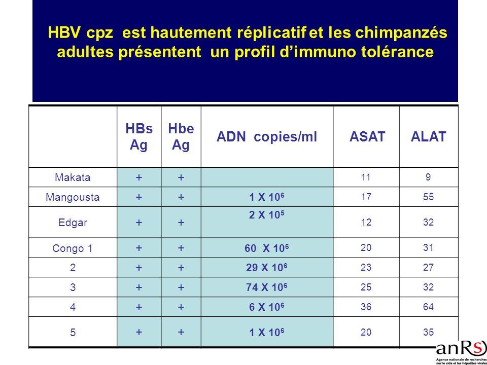 HBV cpz est hautement réplicatif et les chimpanzés adultes présentent un profil dimmuno tolérance HBs Ag Hbe Ag ADN copies/ml ASATALAT Makata ++ 119 M