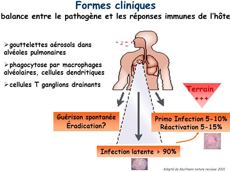 Primo Infection 5-10% Réactivation 5-15% Infection latente > 90% gouttelettes aérosols dans alvéoles pulmonaires phagocytose par macrophages alvéolair