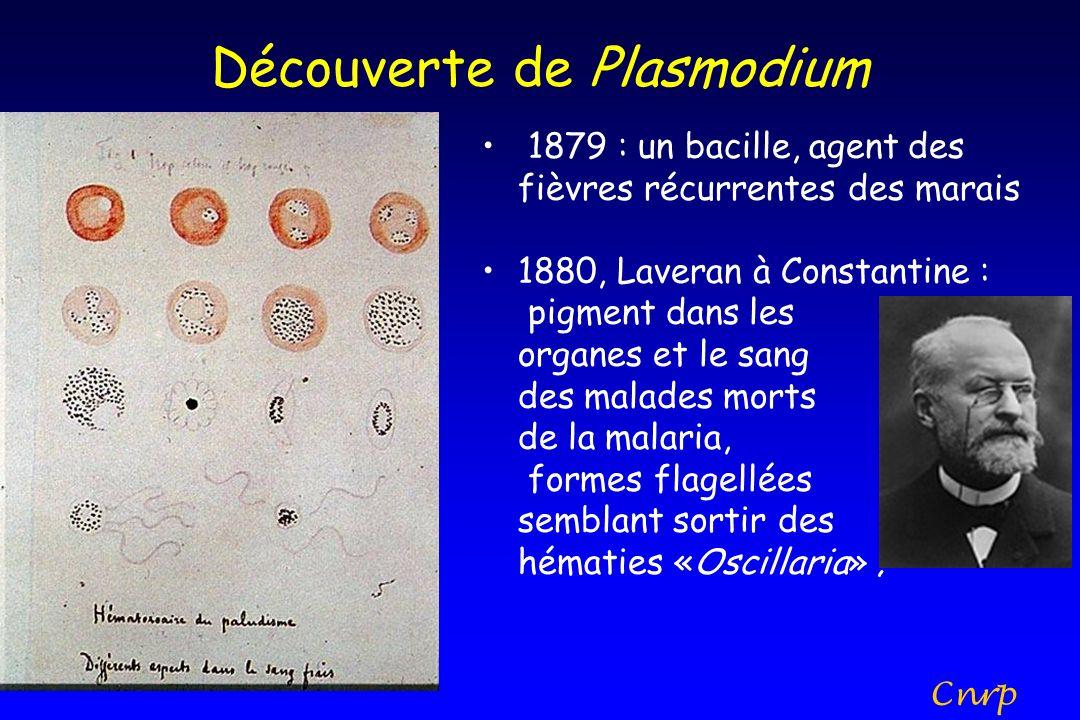Découverte de Plasmodium 1879 : un bacille, agent des fièvres récurrentes des marais 1880, Laveran à Constantine : pigment dans les organes et le sang