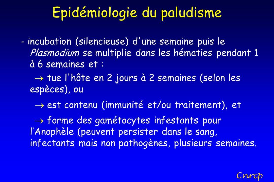 Epidémiologie du paludisme - incubation (silencieuse) d'une semaine puis le Plasmodium se multiplie dans les hématies pendant 1 à 6 semaines et : tue