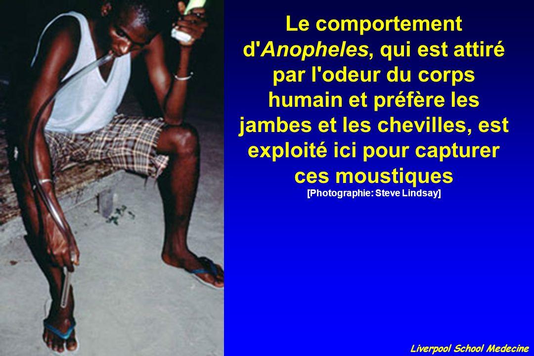 Le comportement d'Anopheles, qui est attiré par l'odeur du corps humain et préfère les jambes et les chevilles, est exploité ici pour capturer ces mou