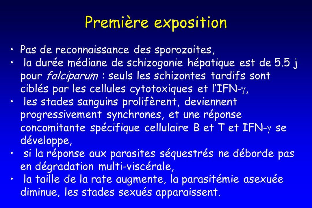 Première exposition Pas de reconnaissance des sporozoites, la durée médiane de schizogonie hépatique est de 5.5 j pour falciparum : seuls les schizont