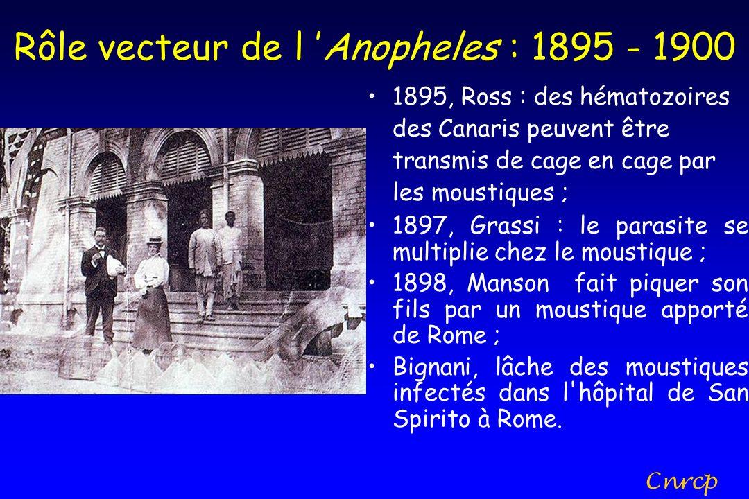 Rôle vecteur de l Anopheles : 1895 - 1900 1895, Ross : des hématozoires des Canaris peuvent être transmis de cage en cage par les moustiques ; 1897, G