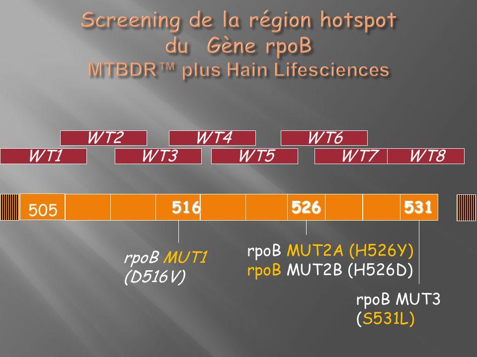 505 516 526531 WT1 WT6 WT5 WT4 WT3 WT2 WT7 WT8 rpoB MUT1 (D516V) rpoB MUT2A (H526Y) rpoB MUT2B (H526D) rpoB MUT3 (S531L)