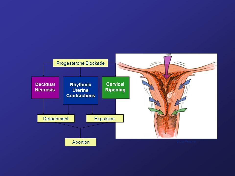 Rhythmic Uterine Contractions Progesterone Blockade Decidual Necrosis Cervical Ripening DetachmentExpulsion Abortion © Lisa Penalver