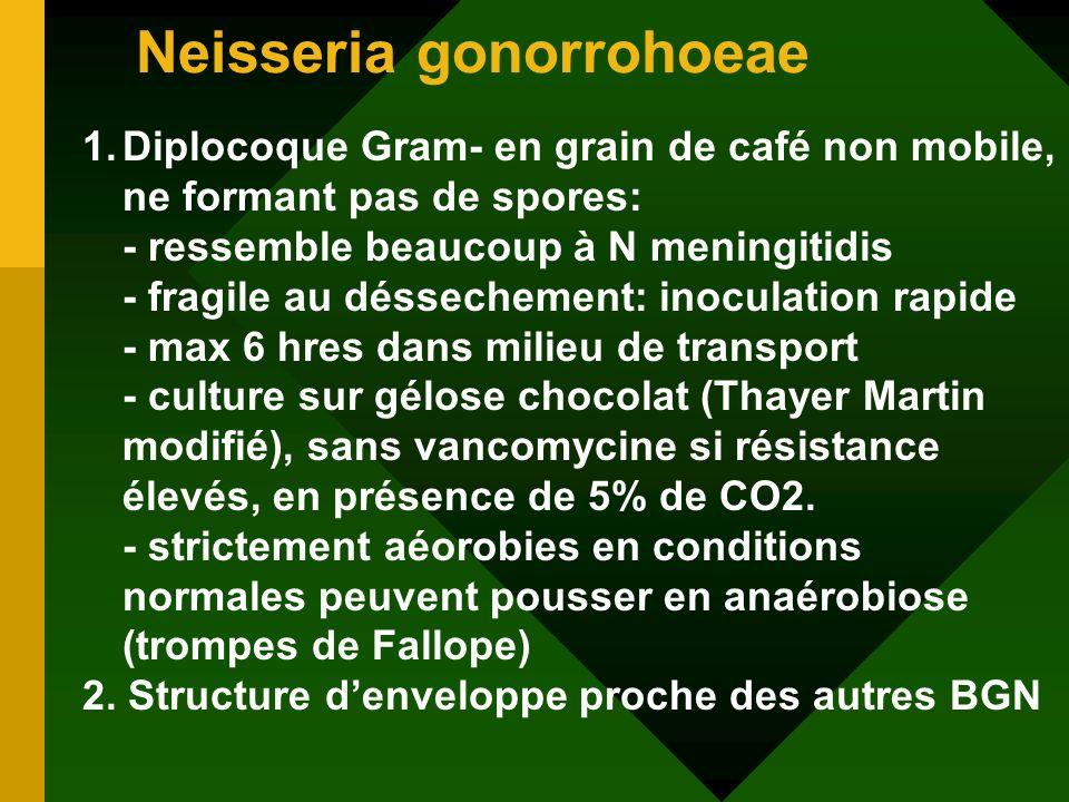 Neisseria gonorrohoeae 1.Diplocoque Gram- en grain de café non mobile, ne formant pas de spores: - ressemble beaucoup à N meningitidis - fragile au dé