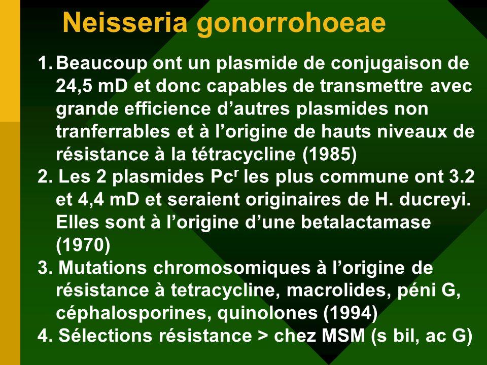 Neisseria gonorrohoeae 1.Beaucoup ont un plasmide de conjugaison de 24,5 mD et donc capables de transmettre avec grande efficience dautres plasmides n