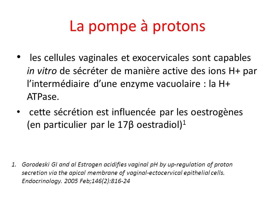 La pompe à protons les cellules vaginales et exocervicales sont capables in vitro de sécréter de manière active des ions H+ par lintermédiaire dune en