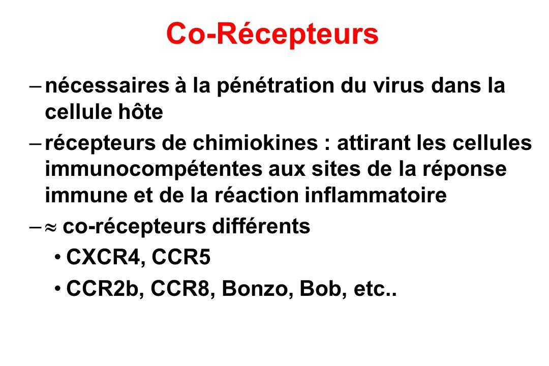 Co-Récepteurs –nécessaires à la pénétration du virus dans la cellule hôte –récepteurs de chimiokines : attirant les cellules immunocompétentes aux sites de la réponse immune et de la réaction inflammatoire – co-récepteurs différents CXCR4, CCR5 CCR2b, CCR8, Bonzo, Bob, etc..
