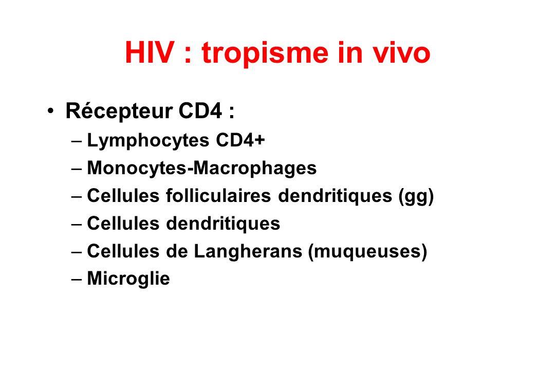 HIV : tropisme in vivo Récepteur CD4 : –Lymphocytes CD4+ –Monocytes-Macrophages –Cellules folliculaires dendritiques (gg) –Cellules dendritiques –Cellules de Langherans (muqueuses) –Microglie