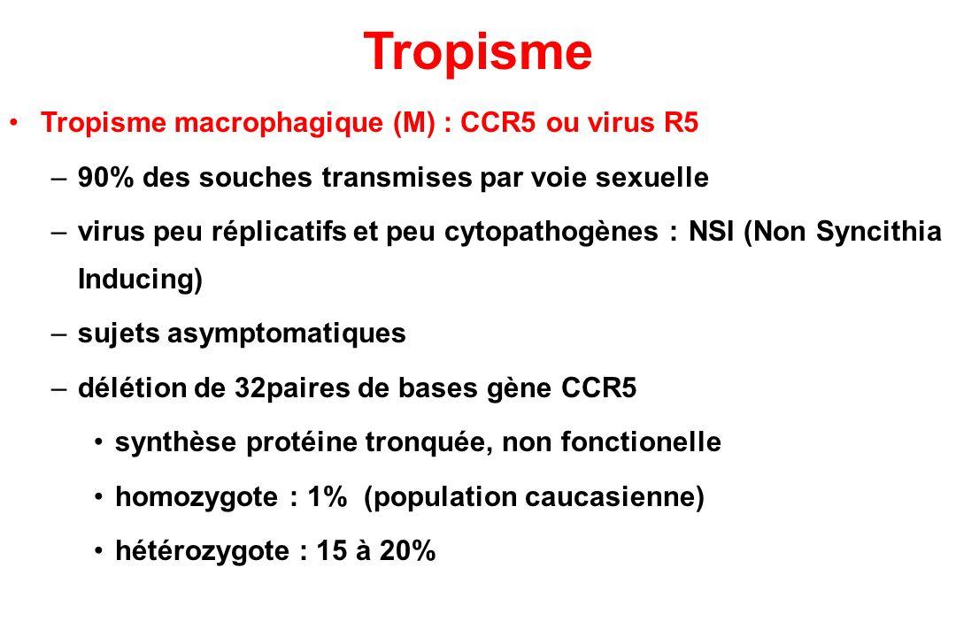 Tropisme Tropisme macrophagique (M) : CCR5 ou virus R5 –90% des souches transmises par voie sexuelle –virus peu réplicatifs et peu cytopathogènes : NSI (Non Syncithia Inducing) –sujets asymptomatiques –délétion de 32paires de bases gène CCR5 synthèse protéine tronquée, non fonctionelle homozygote : 1% (population caucasienne) hétérozygote : 15 à 20%
