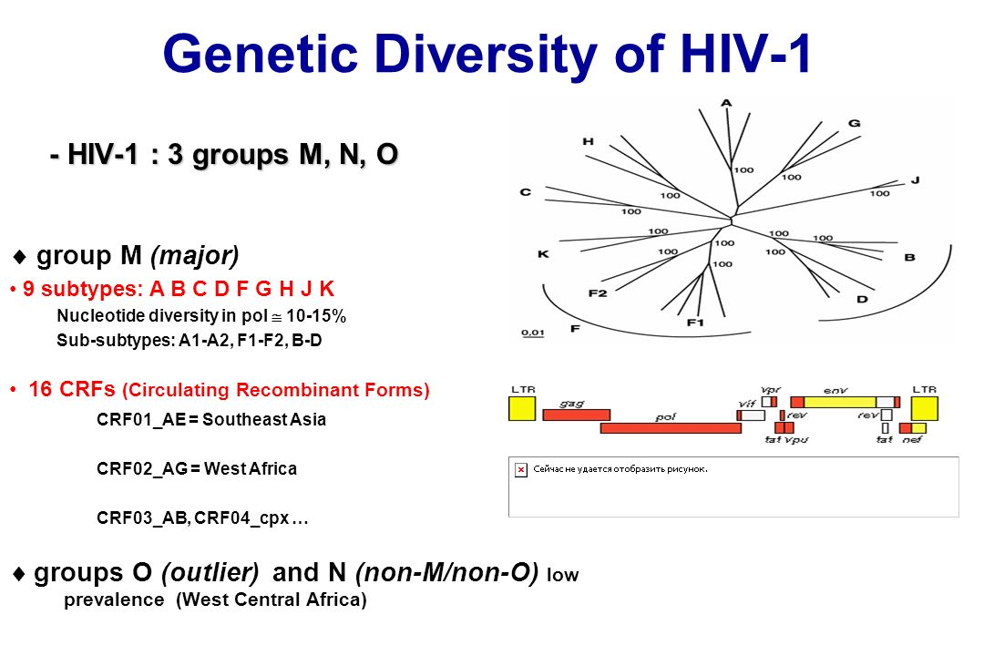 Genetic Diversity of HIV-1 - HIV-1 : 3 groups M, N, O - HIV-1 : 3 groups M, N, O group M (major) 9 subtypes: A B C D F G H J K Nucleotide diversity in pol 10-15% Sub-subtypes: A1-A2, F1-F2, B-D groups O (outlier) and N (non-M/non-O) low prevalence (West Central Africa) 16 CRFs (Circulating Recombinant Forms) CRF01_AE = Southeast Asia CRF02_AG = West Africa CRF03_AB, CRF04_cpx …