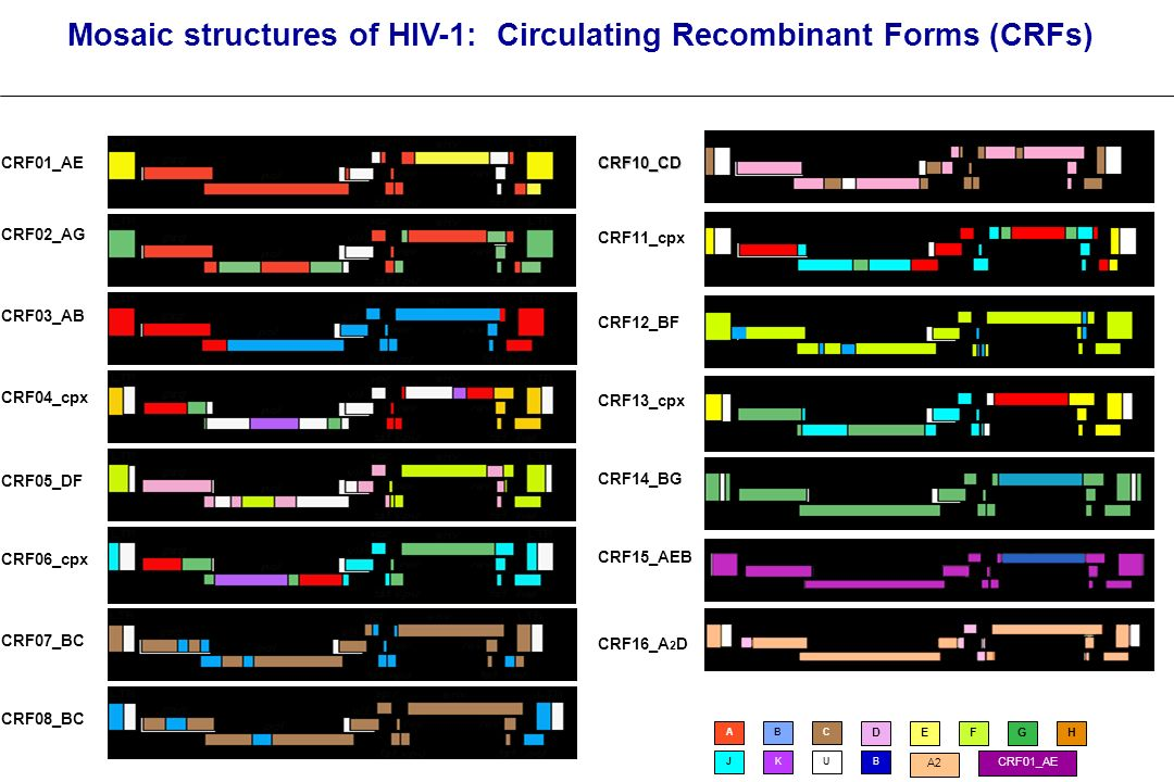 Mosaic structures of HIV-1: Circulating Recombinant Forms (CRFs) CRF01_AE CRF03_AB CRF02_AG CRF04_cpx CRF05_DF CRF06_cpx CRF07_BC CRF08_BC CRF10_CD CR