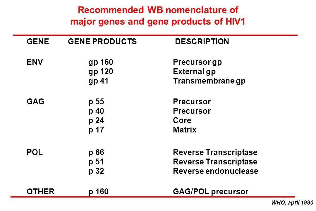 Recommended WB nomenclature of major genes and gene products of HIV1 GENEGENE PRODUCTS DESCRIPTION ENVgp 160Precursor gp gp 120External gp gp 41Transmembrane gp GAGp 55Precursor p 40Precursor p 24Core p 17Matrix POLp 66Reverse Transcriptase p 51Reverse Transcriptase p 32Reverse endonuclease OTHERp 160GAG/POL precursor WHO, april 1990