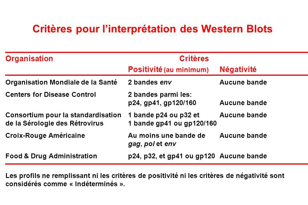 Critères pour linterprétation des Western Blots Organisation Critères Positivité (au minimum) Négativité Organisation Mondiale de la Santé2 bandes envAucune bande Centers for Disease Control2 bandes parmi les: p24, gp41, gp120/160Aucune bande Consortium pour la standardisation1 bande p24 ou p32 etAucune bande de la Sérologie des Rétrovirus1 bande gp41 ou gp120/160 Croix-Rouge AméricaineAu moins une bande deAucune bande gag, pol et env Food & Drug Administrationp24, p32, et gp41 ou gp120Aucune bande Les profils ne remplissant ni les critères de positivité ni les critères de négativité sont considérés comme « Indéterminés ».