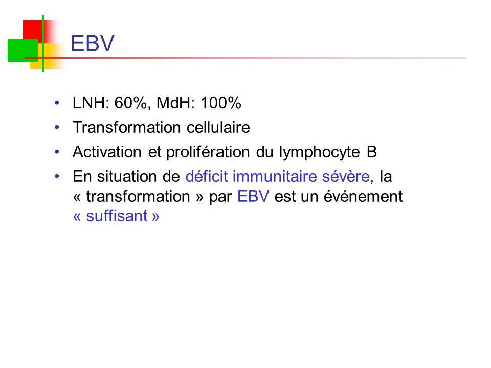 EBV LNH: 60%, MdH: 100% Transformation cellulaire Activation et prolifération du lymphocyte B En situation de déficit immunitaire sévère, la « transfo