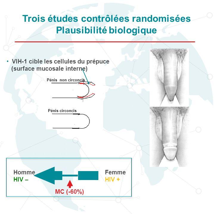 Trois études contrôlées randomisées Plausibilité biologique Homme HIV – Femme HIV + MC (-60%) VIH-1 cible les cellules du prépuce (surface mucosale in
