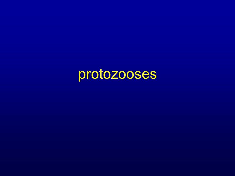Leishmanioses (3) Diagnostic Idem IC (sf sérologie) Culture + : 55 à 88% PCR + : 82 à 98% Intérêt hémoconcentration TTT Efficacité très liée à immunité TTT standard moins efficace (40= 65%) + rechutes++ Pentamidine / ampho B & ampho B liposomal miltéfosine .