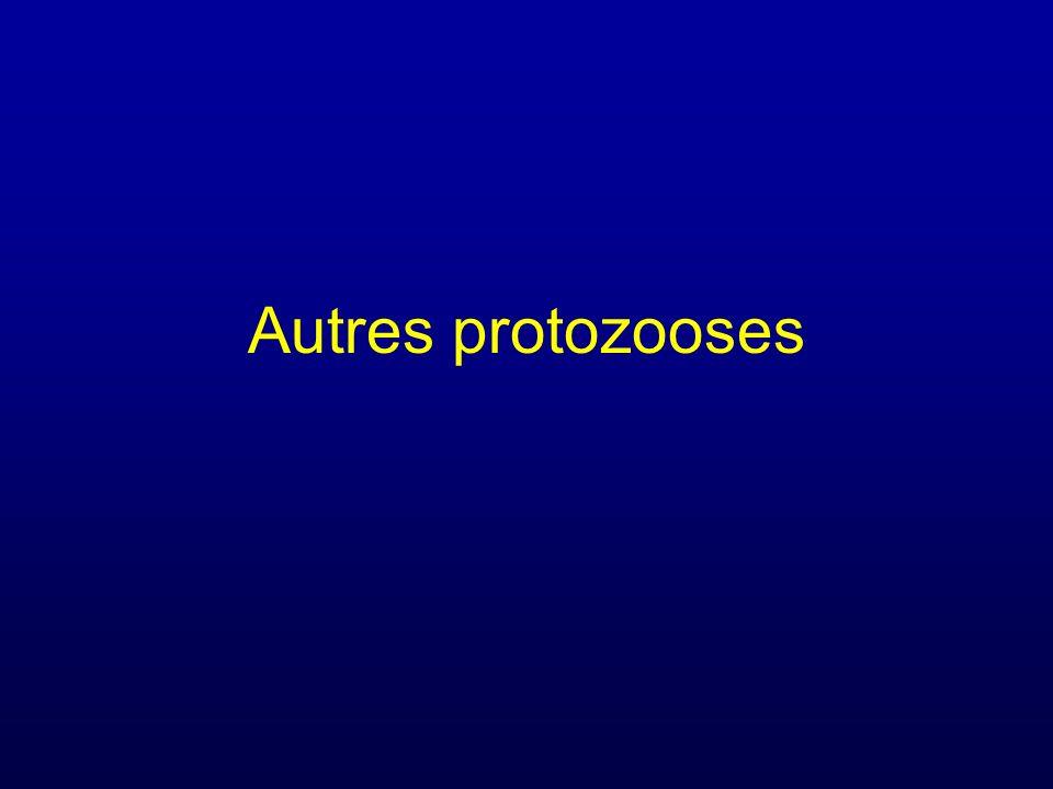 Autres protozooses