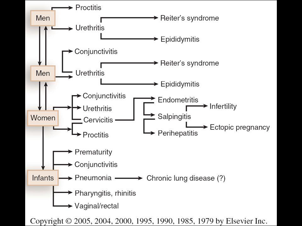 Azithromycine 1 g p os x 1 j Doxyxycline 100mg p os x 2 x 7j Erythromycin base 500 mg orally four times a day for 7 days, OR Erythromycin ethylsuccinate 800 mg orally four times a day for 7 days, OR Ofloxacin 300 mg twice a day for 7 days, OR Levofloxacin 500 mg once daily for 7 days.