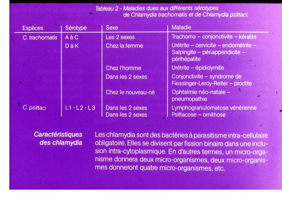 Azithromycine 1 g p os x 1 j Or Doxycycline 100mg p os x 2 x 7j Alternatives: Amoxicilline 500 mg x3 x 7 j Erythromycin base 500 mg orally four times a day for 7 days, OR Tetracycline, 500 mg p os x4 x 7j OR Ofloxacin 300 mg twice a day for 7 days, INFECTION A CHLAMYDIA (WHO,2004) (Urethre, endocol, rectum)
