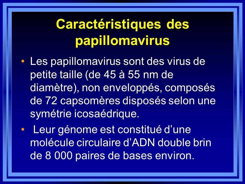 Caractéristiques des papillomavirus Les papillomavirus sont des virus de petite taille (de 45 à 55 nm de diamètre), non enveloppés, composés de 72 cap
