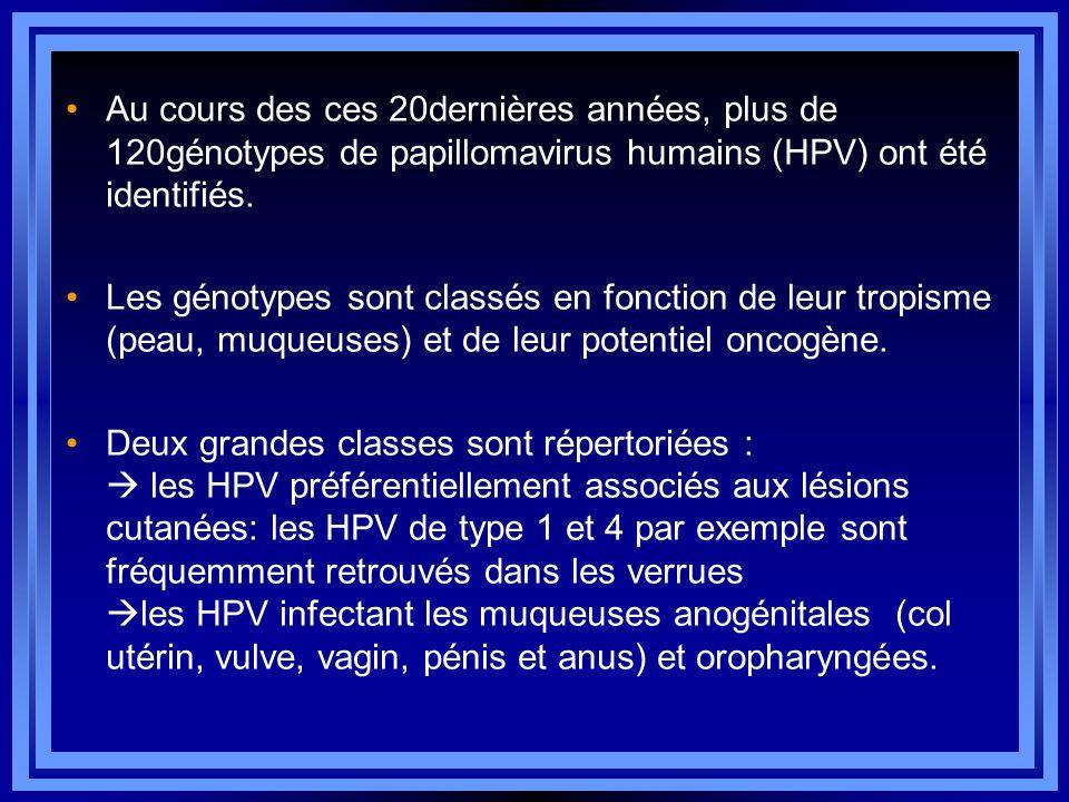 Au cours des ces 20dernières années, plus de 120génotypes de papillomavirus humains (HPV) ont été identifiés. Les génotypes sont classés en fonction d