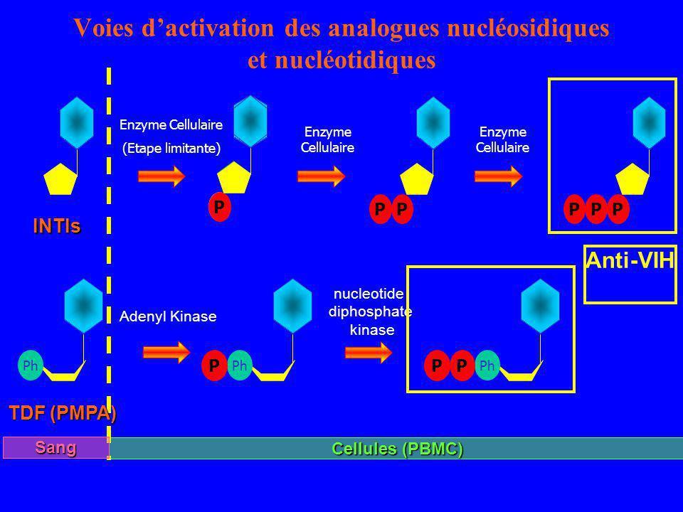 Voies dactivation des analogues nucléosidiques et nucléotidiques Ph PP P Adenyl Kinase nucleotide diphosphate kinase Enzyme Cellulaire (Etape limitant