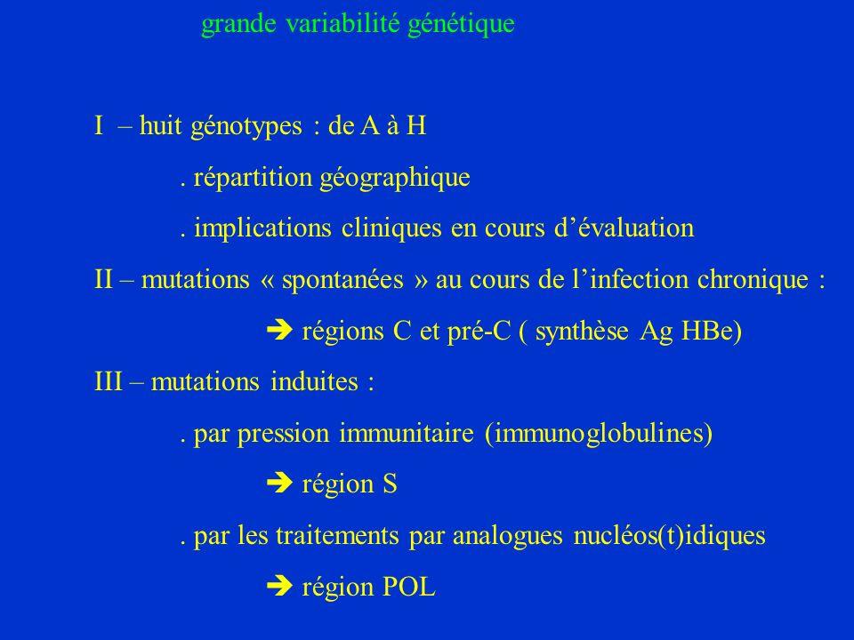 grande variabilité génétique I – huit génotypes : de A à H.