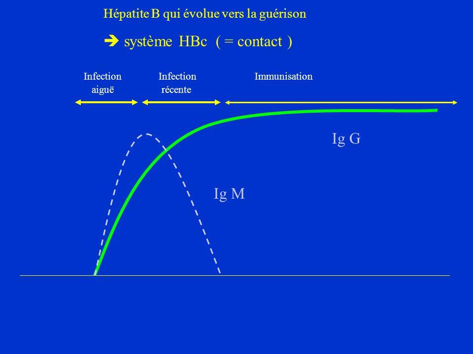 Hépatite B qui évolue vers la guérison système HBc ( = contact ) Ig G Ig M Infection Infection Immunisation aiguë récente