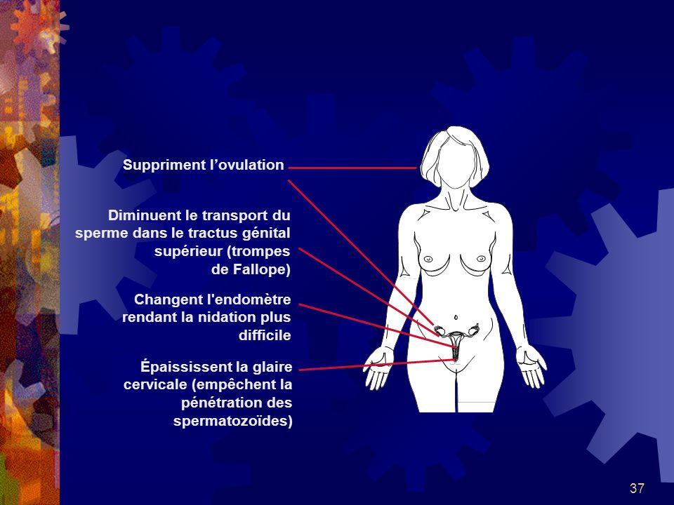 37 Suppriment lovulation Diminuent le transport du sperme dans le tractus génital supérieur (trompes de Fallope) Épaississent la glaire cervicale (emp
