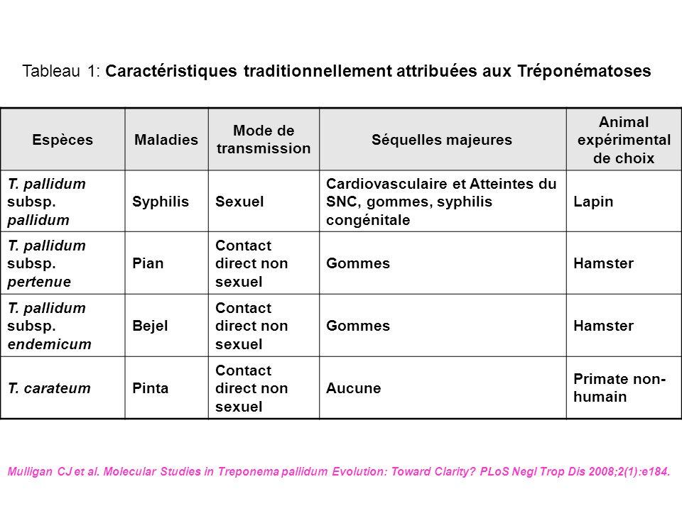 EspècesMaladies Mode de transmission Séquelles majeures Animal expérimental de choix T. pallidum subsp. pallidum SyphilisSexuel Cardiovasculaire et At