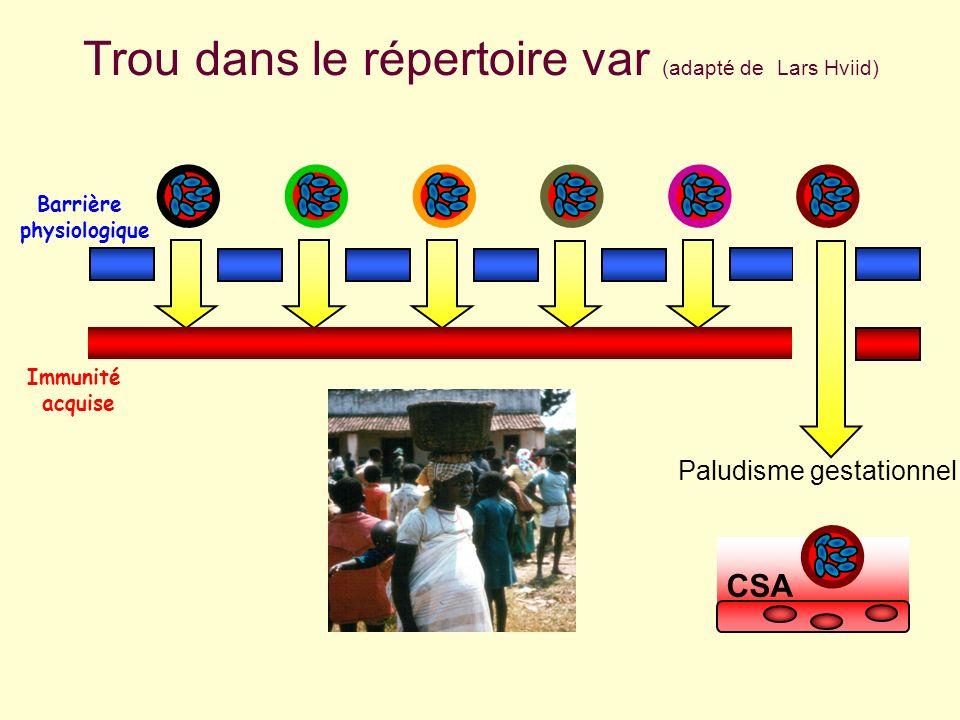 Trou dans le répertoire var (adapté de Lars Hviid) Barrière physiologique Immunité acquise Paludisme gestationnel CSA