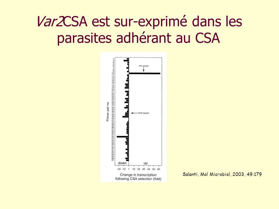 Var2CSA est sur-exprimé dans les parasites adhérant au CSA Salanti, Mol Microbiol, 2003, 49:179
