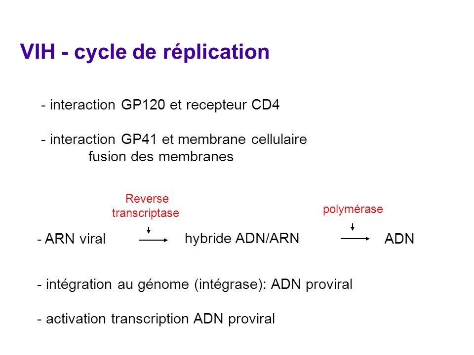 VIH - cycle de réplication - interaction GP120 et recepteur CD4 - interaction GP41 et membrane cellulaire fusion des membranes - ARN viral hybride ADN