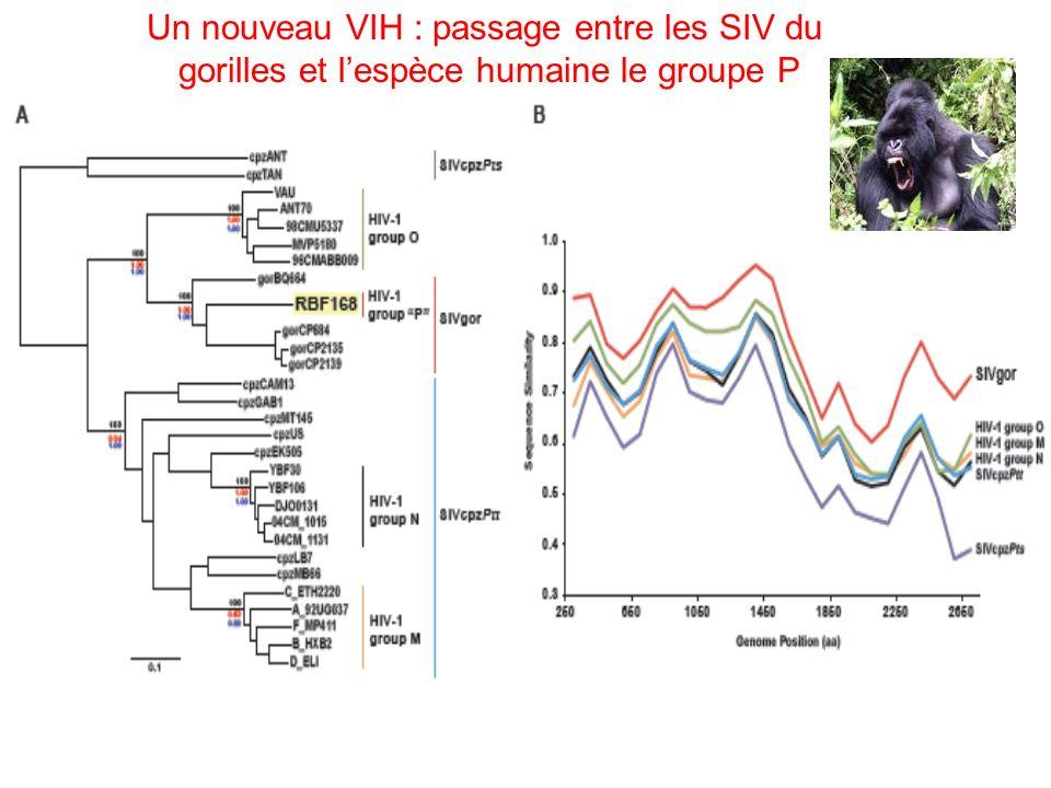 Technique ANRS PCR en temps réel pour la quantification de lARN VIH-1 plasmatique (Rouet et al.