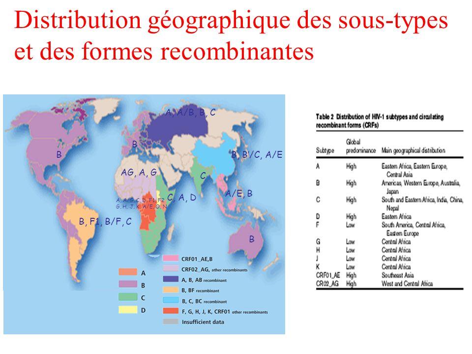 Distribution géographique des sous-types et des formes recombinantes B B, F1, B/F, C B AG, A, G A, A/G, C, D, F1, F2 G, H, J, K, A/E, O, N C, A, D C B