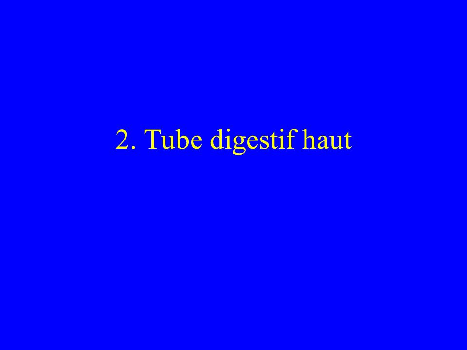 2. Tube digestif haut