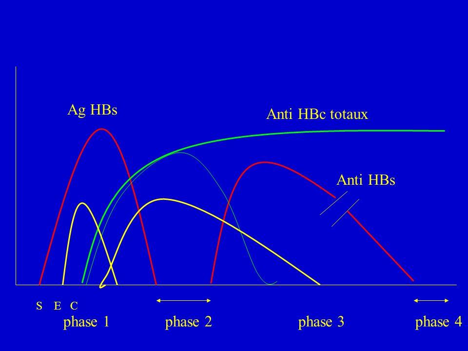 Ag HBs Anti HBs Anti HBc totaux S E C phase 1 phase 2 phase 3 phase 4