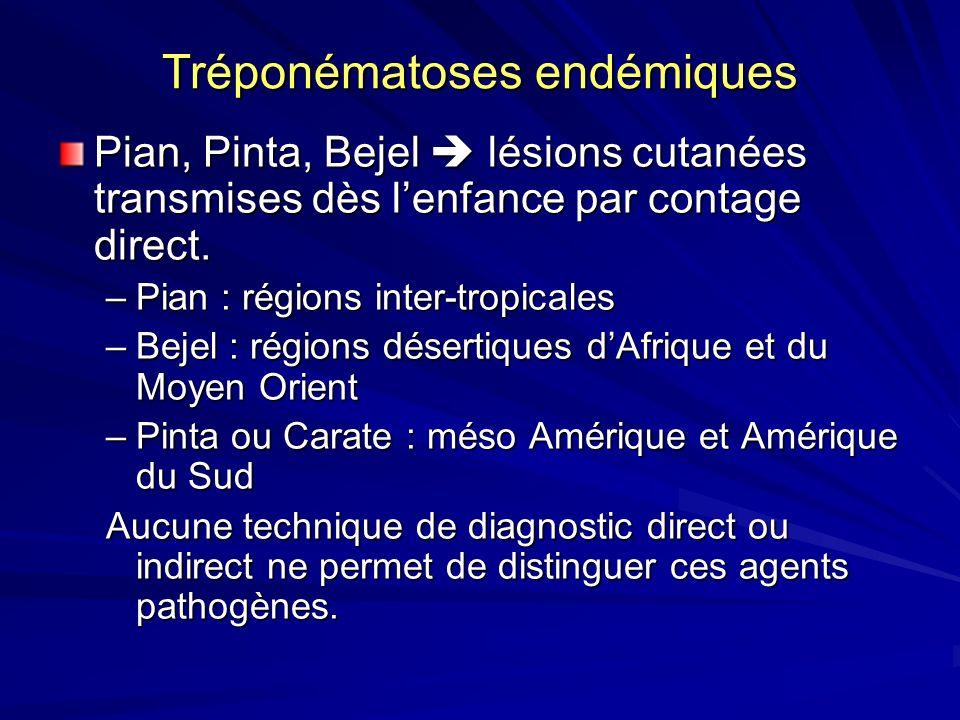 Tréponématoses endémiques Pian, Pinta, Bejel lésions cutanées transmises dès lenfance par contage direct. –Pian : régions inter-tropicales –Bejel : ré