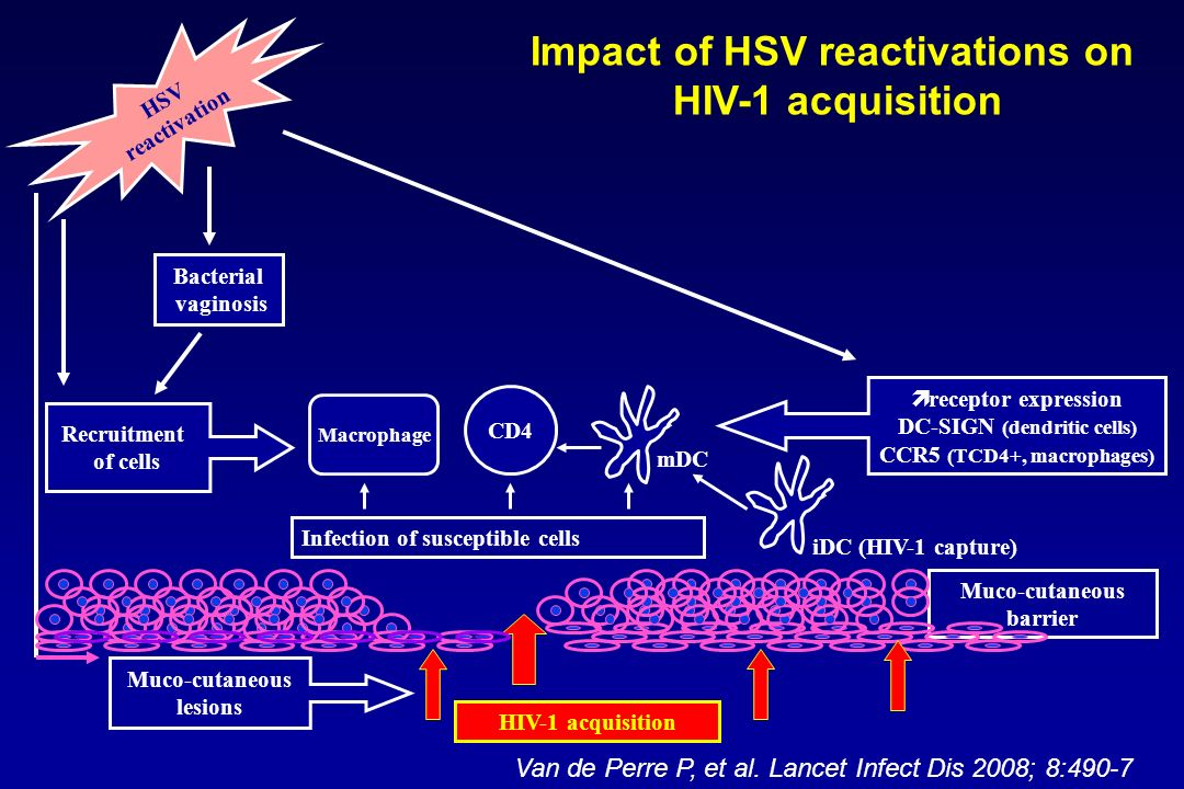 Muco-cutaneous barrier HIV-1 acquisition Infection of susceptible cells CD4 Macrophage iDC (HIV-1 capture) mDC receptor expression DC-SIGN (dendritic