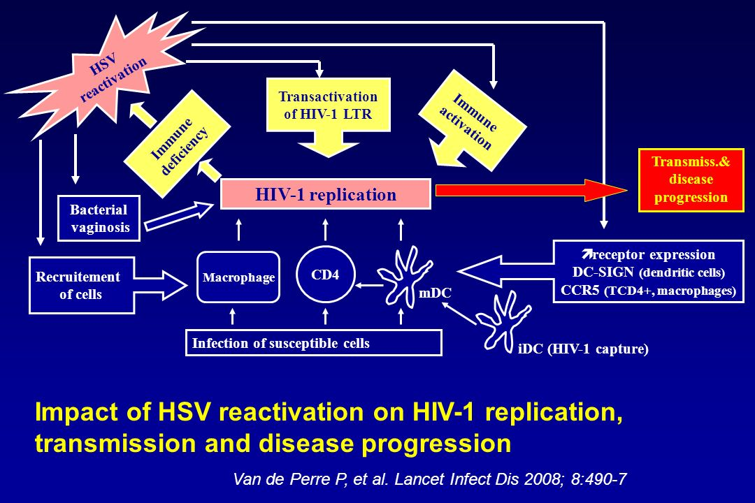 Infection of susceptible cells HIV-1 replication CD4 Macrophage iDC (HIV-1 capture) mDC receptor expression DC-SIGN (dendritic cells) CCR5 (TCD4+, mac