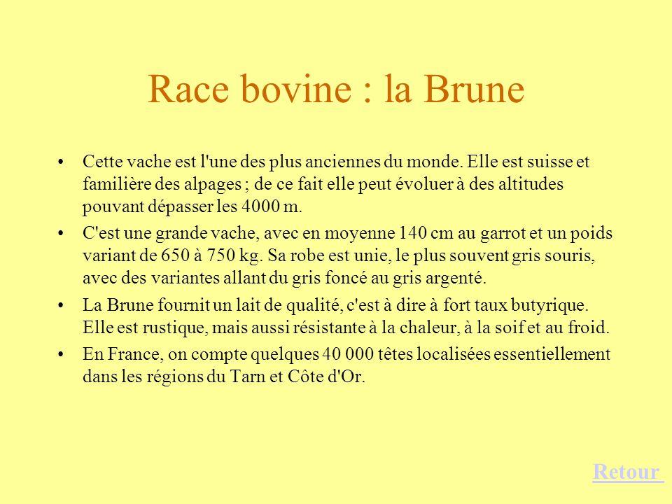Race bovine : la Brune Cette vache est l'une des plus anciennes du monde. Elle est suisse et familière des alpages ; de ce fait elle peut évoluer à de