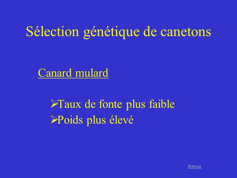 Sélection génétique de canetons Canard mulard Taux de fonte plus faible Poids plus élevé Retour