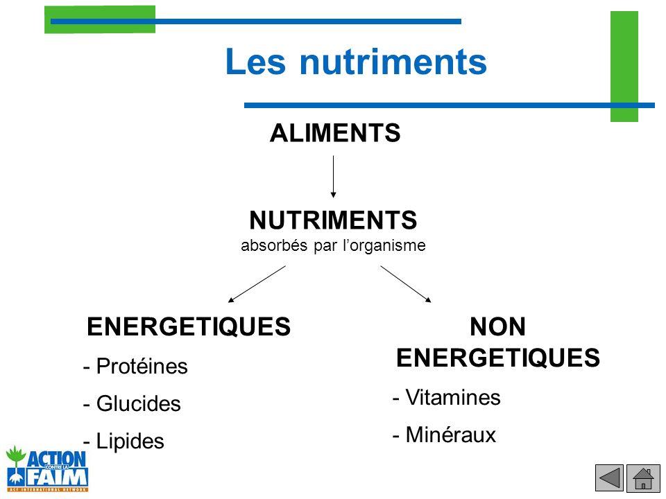 ALIMENTS ENERGETIQUES - Protéines - Glucides - Lipides NON ENERGETIQUES - Vitamines - Minéraux Les nutriments NUTRIMENTS absorbés par lorganisme