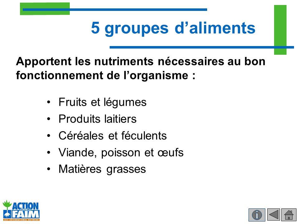 5 groupes daliments Fruits et légumes Produits laitiers Céréales et féculents Viande, poisson et œufs Matières grasses Apportent les nutriments nécess
