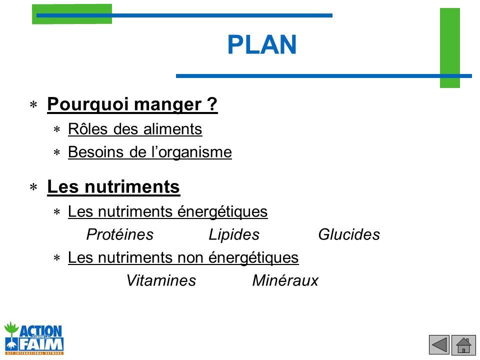 PLAN (suite) Les 5 groupes daliments Les fruits et légumes Les produits laitiers Les céréales et féculents Les viandes poisson et œufs Les matières grasses Conservation des aliments